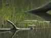 Austria / Vienna / Prater Garden - Remote Stream