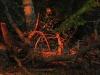 Dusk in Vienna Forest / Wienerwald